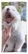 Laughing Adorable White Dog Is Groomed Beach Towel