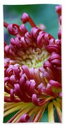 Lava Chrysanthemum Beach Towel