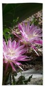 Lavendar Cactus Flowers Beach Towel