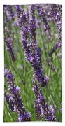 Lavendar Beach Towel