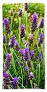 Lavender At Pilgrim Place In Claremont-california Beach Towel