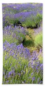 Lavender Field, Tihany, Hungary Beach Towel