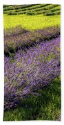 Lavender Fields Forever Beach Towel by Kendall McKernon