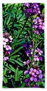Verbena At Pilgrim Place In Claremont-california   Beach Towel