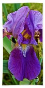 Lavender Iris At Pilgrim Place In Claremont-california  Beach Towel