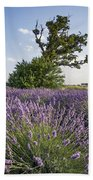 Lavender Provence  Beach Towel