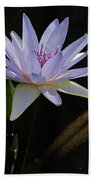 Lavender Tropical Water Lily Beach Towel