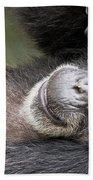 Lazy Chimp - Lowry Park Zoo Beach Towel