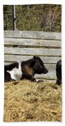 Lazy Cows And Weathered Wood Beach Towel
