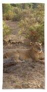 Lazy Samburu Afternoon Beach Towel