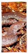 Leadback Salamander Pair Beach Towel