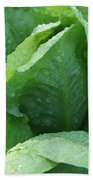 Leaf Lettuce Part 3 Beach Towel