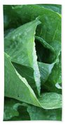 Leaf Lettuce Part 4 Beach Towel