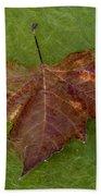 Leaf On Algae Beach Towel