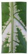 Leaf Variegated 2 Beach Towel