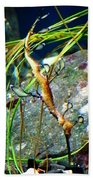 Leafy Sea Dragon  Beach Towel