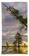 Leaning Cypress Beach Towel