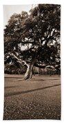 Leaning Tree Beach Towel