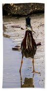 Least Bittern With A Fish Beach Towel