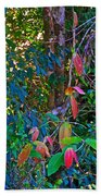Leaves Changing Color As Autumn Approaches In Iguazu Falls National Park-argentina   Beach Towel