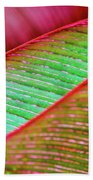 Leaves In Color  Beach Sheet