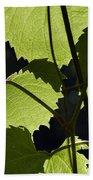 Leaves Of Wine Grape Beach Towel by Michal Boubin
