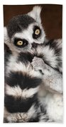 Lemur Beach Towel