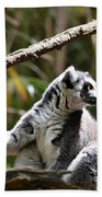 Lemur Love Beach Towel