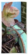 Lenten Rose After An April Shower Beach Towel