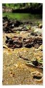 Leopard Frog Landing Beach Towel
