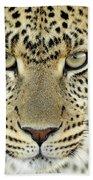 Leopard Panthera Pardus Female Beach Towel