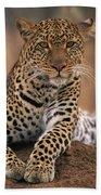 Leopard Panthera Pardus, Masai Mara Beach Towel by Anup Shah