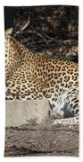 Leopard Relaxing Beach Towel