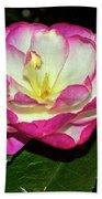 Leslie Ann - Sasanqua Camellia 006 Beach Towel