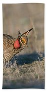 Lesser Prairie Chicken Beach Towel