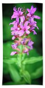Lesser Purple Fringed Orchid Beach Towel