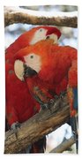 Let Me Get It - Scarlet Macaws Beach Towel