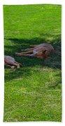 Let Sleeping Dogs Lie Beach Towel