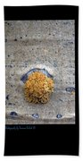 Lichen On The Trees 1 Beach Towel