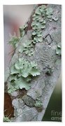 Lichens 2 Beach Towel
