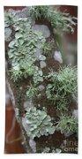 Lichens 4 Beach Towel