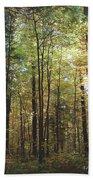 Light Among The Trees Vertical Beach Towel