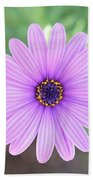 Light Purple Gazania Macro 1  Beach Towel