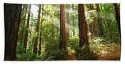 Light The Way - Redwood Forest Of Muir Woods National Monument With Sun Beam. Beach Towel