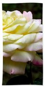 Light Yellow Rose 2 Beach Towel