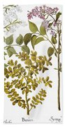 Lilac And Box, 1613 Beach Sheet