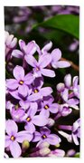 Lilac Bush In Spring Beach Towel