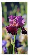 Lilac Iris In Bloom Beach Towel