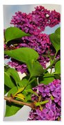 Lilacs Beach Towel