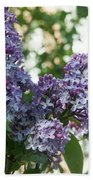 Lilacs In Spring Beach Towel